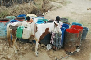 A Mayan woman, boy, and cow gathering water from open barrels in front of the school.